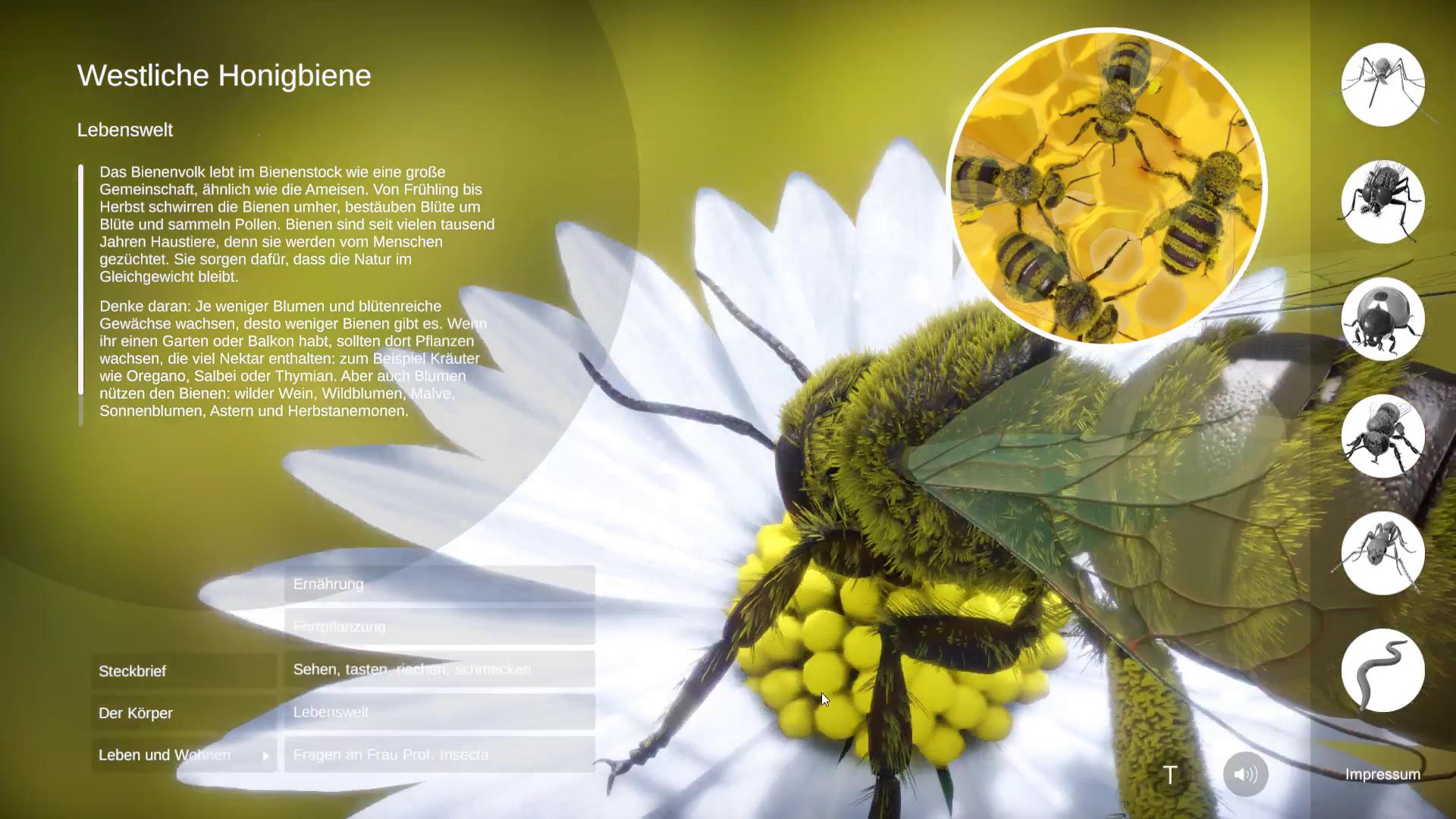 Westliche Honigbeine, 3D-Echtzeit mit Unity © Daniel Ackermann