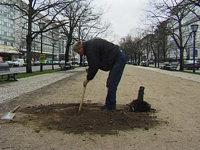 Baumstumpf, Andreas Slominski, Deutsche Guggenheim Berlin, 1998, Videofilm von Martin Kreyssig